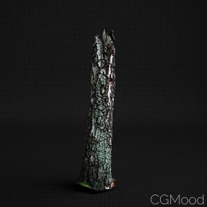 Birch Trunk 03