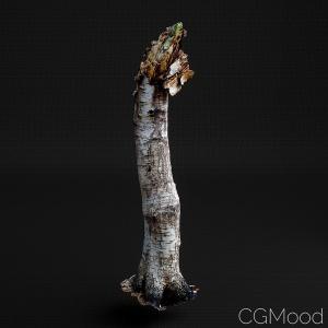 Tree Trunk 5
