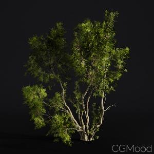 Oak trees - 3 Shapes, lightweight