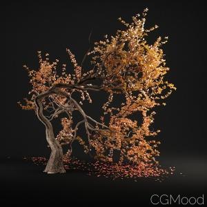 Tree N°7