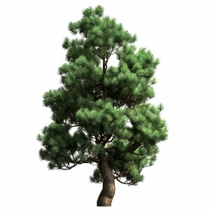 Decorative Pine V2