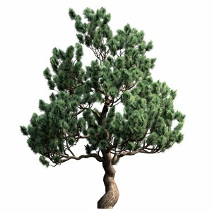 Decorative Pine V3
