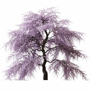 Sakura Tree V2