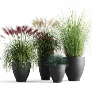 Decorative Cereals In Planters