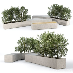 Box Planter Olea Europaea