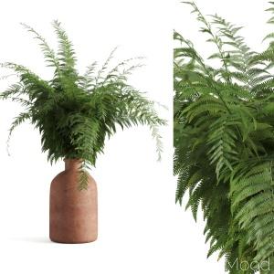 Fern In Terracotta Vase