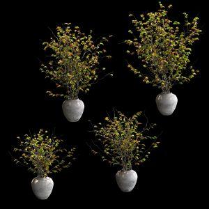 Plants In Pots. 4 Models