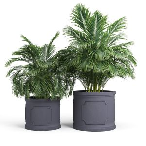 Birmingham Planter Palm