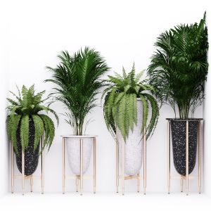 Palm And Fern Corner
