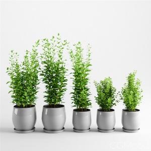Campana Grey Planters