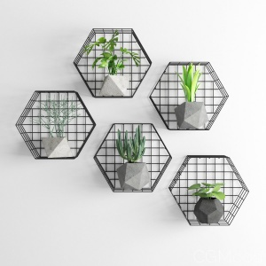 Plants Wall