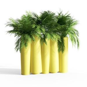 Bamboo Luminoso