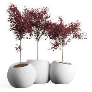 Japanese Maple Concrete Planter Round Modular Cont