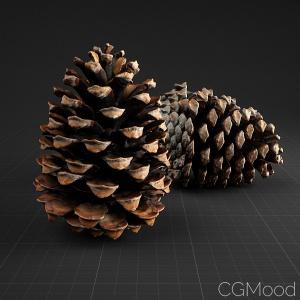 Pine Cone_01