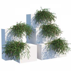 Plant 1247