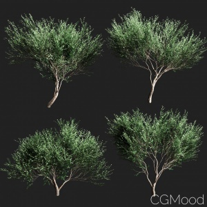 Set Of Olive Trees V2 - 4  Models