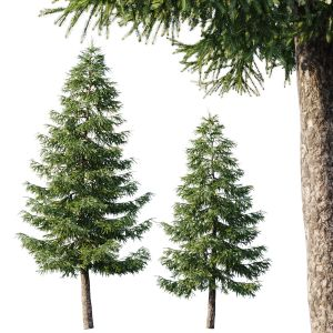 Spruce (12,5m And 9,5m)
