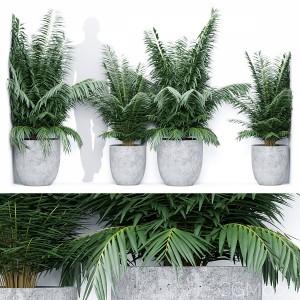 Corner Palm