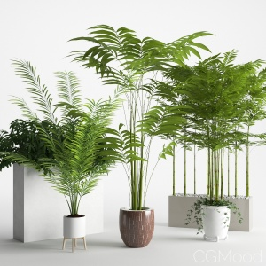 Houseplants 3