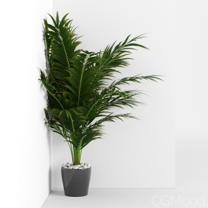 Houseplant 16 - Corner version