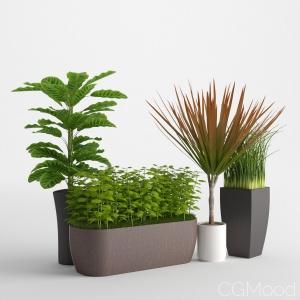 Houseplant 7