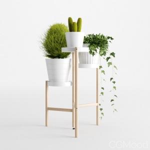 Houseplant 10
