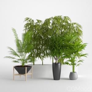 Houseplant 12