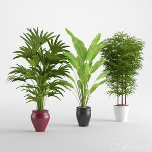 Houseplant 14