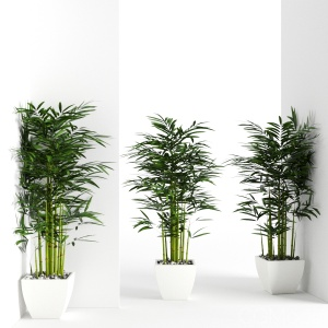 Houseplant 19 (wall collisions)