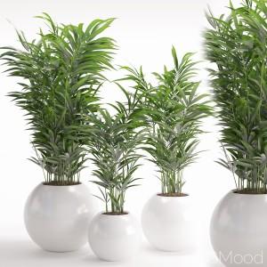 Houseplant 20