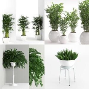 Plants collection vol 1