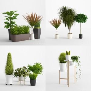 Plants Collection Vol 2