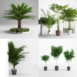 Plants Collection Vol 3