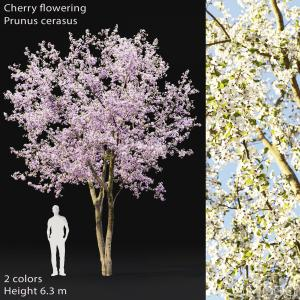 Cherry-tree Flowering #2