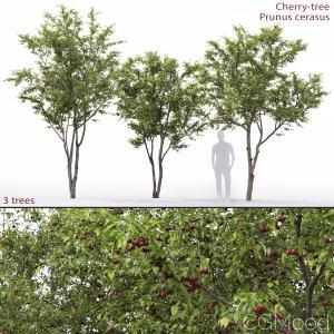 Cherry-tree #1