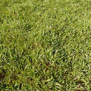 High Details Grass