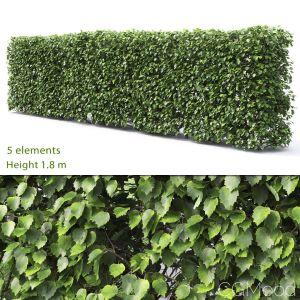 Crataegus Hedge #2(1.8m)