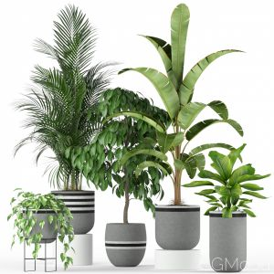 Plants Collection 212