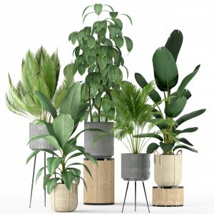 Plants Collection 213