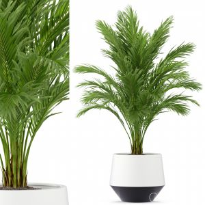 Plants Collection 248