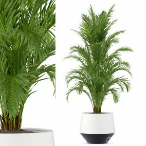 Plants Collection 249