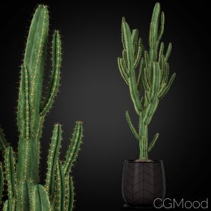 Plants Collection 251