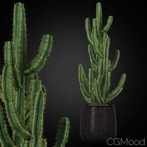 Plants Collection 252