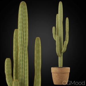 Plants Collection 253