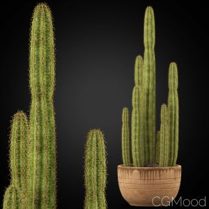 Plants Collection 255