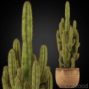 Plants Collection 256