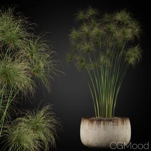 Plants Collection 257