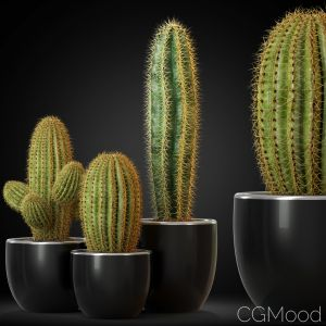 Plants Collection 258