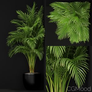 Plants Collection 259