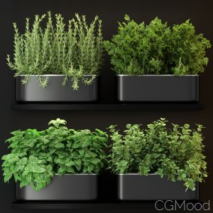 Plants Collection 262